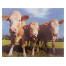 Fun Cows in Field 3D Photo Card Backed Wall Art